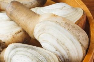 ミルクイ | ミル貝 | 貝の図鑑